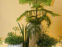 Topfpflanzen für Drinnen