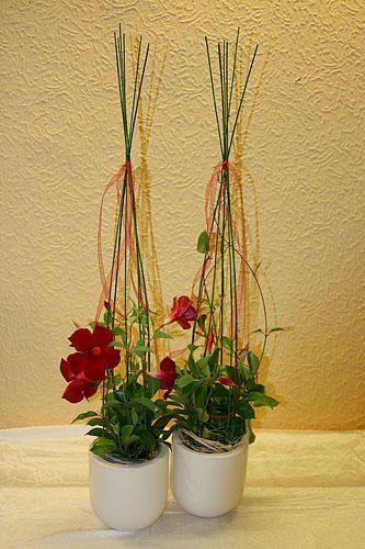 Topfpflanzen kaufen in hochdorf bei plochingen for Pflanzen drinnen