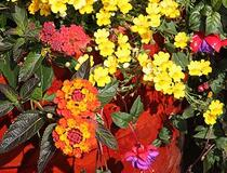 Topfpflanzen für Draußen